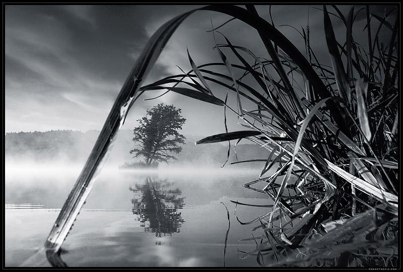 Загрузка картинки: трава, вода, берег / 280028 / globalwalls.ru.